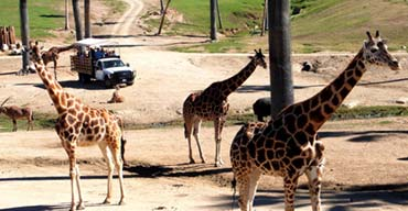 6 San Diego Zoo Safari Park Tips That Will Make Your Visit Even Better