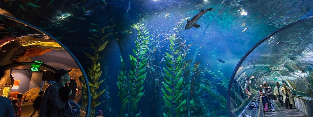 Aquarium of the Bay  in San Francisco, California