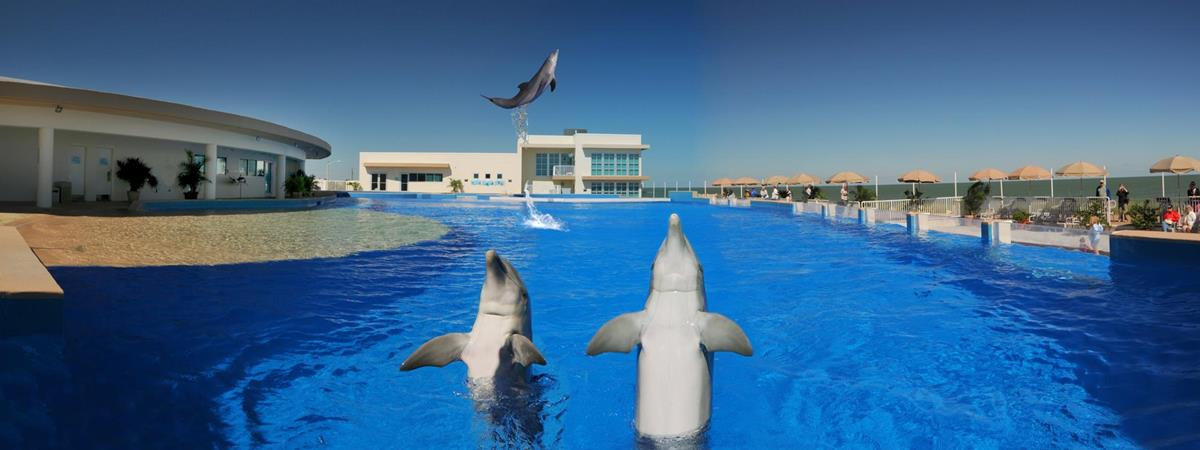 Marineland Dolphin Adventure in St. Augustine, Florida