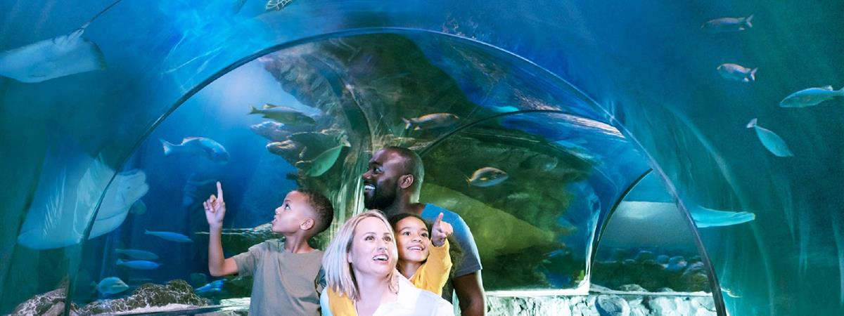 Sea Life Orlando Aquarium - Orlando, FL   Tripster