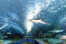 Ripley's Aquarium in Myrtle Beach, South Carolina