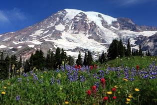 Mt. Rainier Tour in Seattle, Washington
