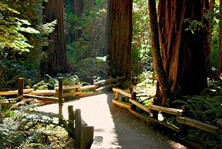 Muir Woods and Wine Country Day Tour in San Francisco , California