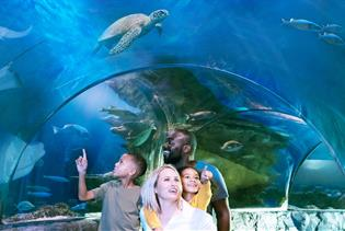 SEA LIFE Orlando Aquarium in Orlando, Florida