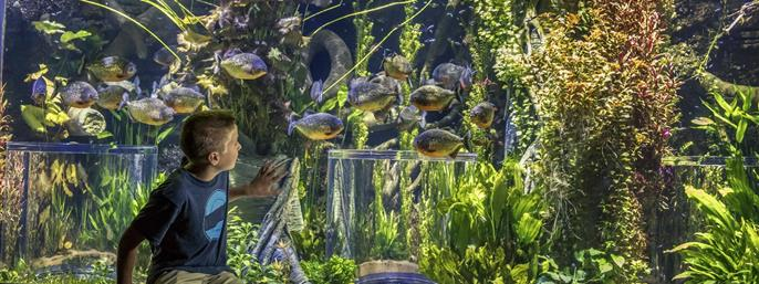 Johnny Morris' Wonders of Wildlife National Museum & Aquarium