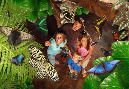 Go on the adventure of a lifetime and witness thousands of exotic butterflies fluttering right before your very eyes!