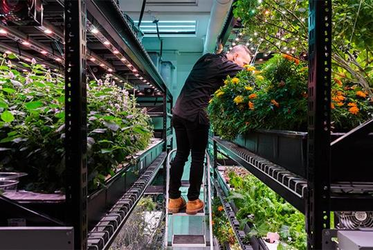 Come see what we've got growing!-  Hydroponic Farm Tour & Tasting at Farm.One in New York, NY