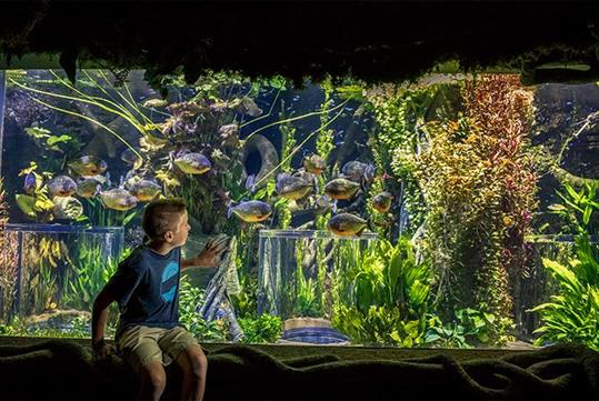 Johnny Morris' Wonders of Wildlife National Museum & Aquarium in Springfield, MO