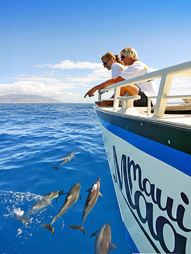 Dolphins Riding Along the Bow of the Maui Magic