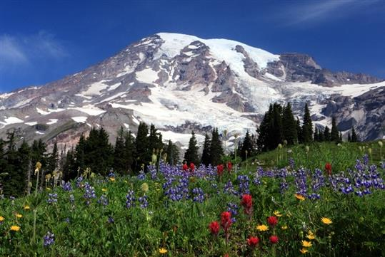 Mt. Rainier Tour, departing from downtown Seattle, with Shutter Tours