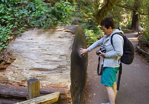 Get up close to ancient redwoods. Muir Woods Tour of California Coastal Redwoods in San Francisco, California