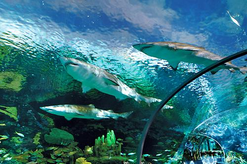 Ripley's Aquarium of the Smokies in Gatlinburg, Tennessee