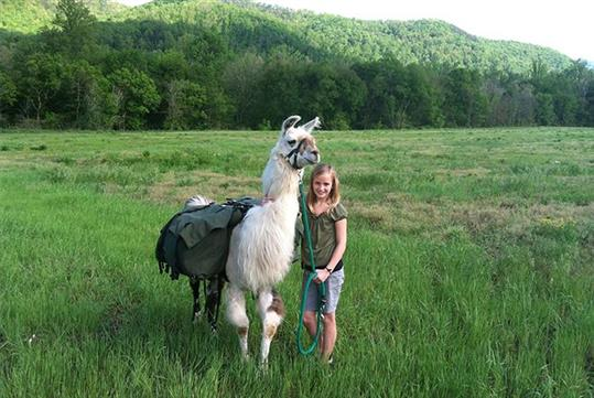 Smoky Mountain Llama Trek in Cosby, TN