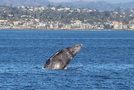 Whale and Dolphin Watching Adventure Tour