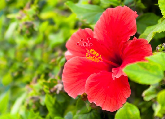 510568563 Kauai activities