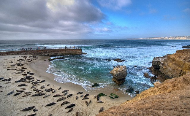 La Jolla Beach_Seals_CC