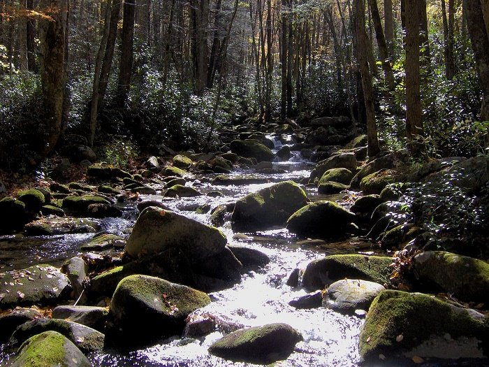 Easy Hikes in The Great Smoky Mountains