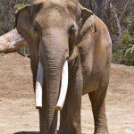 San_Diego_Zoo_43991