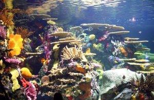 Aquarium of tropical fish at Ripleys Aquarium