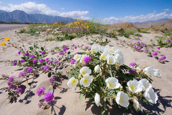 Anza Desert 477233943