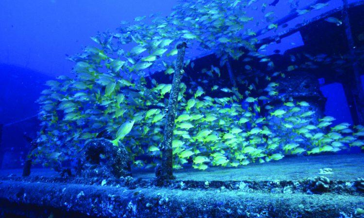 Atlantis Adventures Oahu