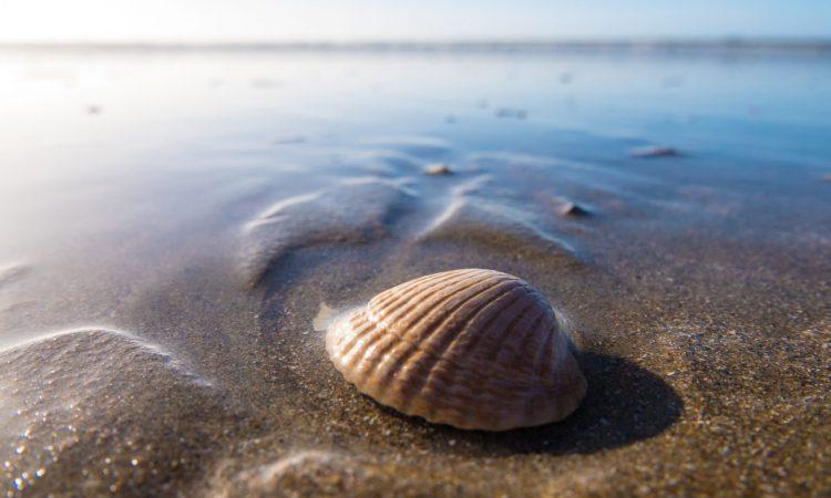 myrtle beach budget activities