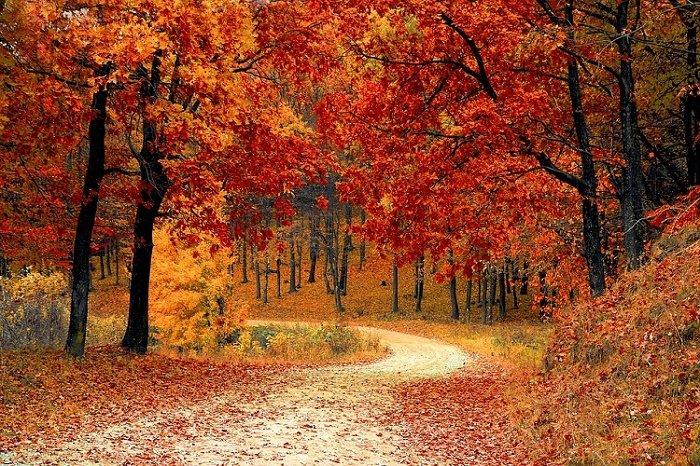 Fall in Branson