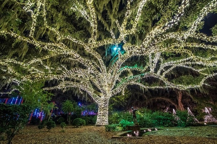 A tree at Brookgreen Gardens is adorned in thousands of white Christmas lights