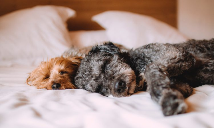 Pet friendly hotels in Pigeon Forge