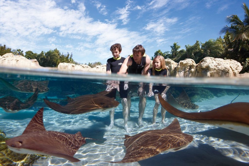 discovery_cove_dc_ray_lagoon_family_1_high_resolution_rsz