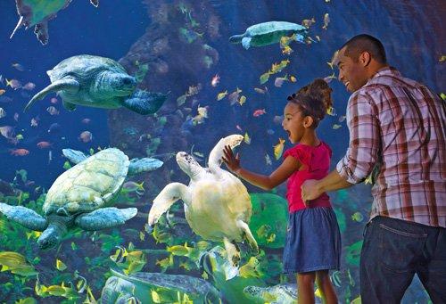 SeaWorld_San_Diego_(32578)