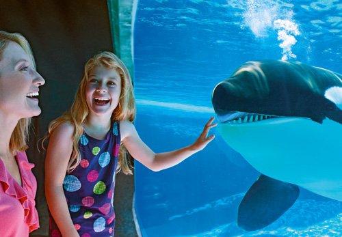 SeaWorld_San_Diego_(40126)