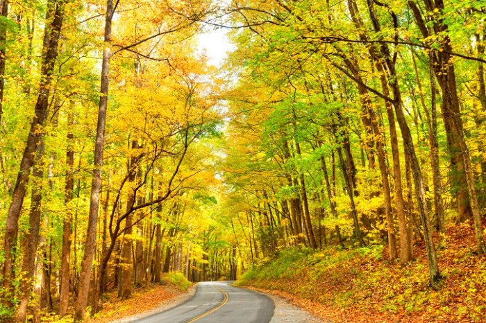 Smoky Mountains road lined with yellow fall foliage