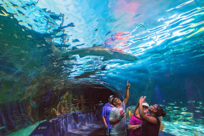 A family in Ripley's Aquarium's viewing tunnel point at a shark swimming by.