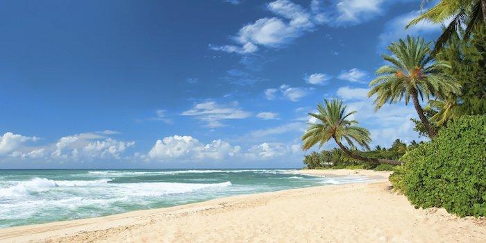 Hawaii beach sand ocean 453887589