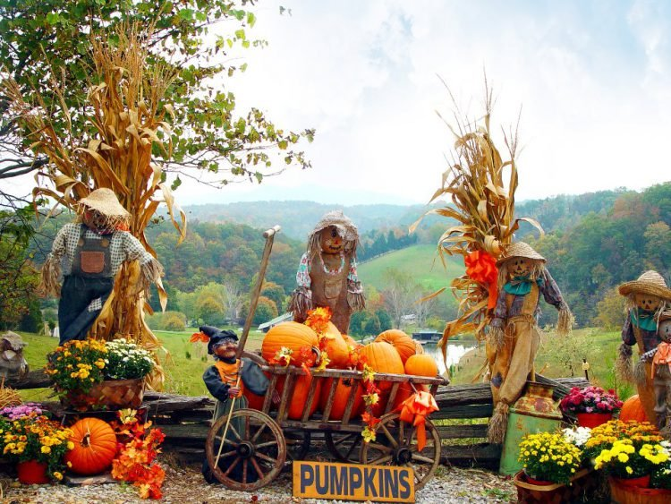 Pumpkins, scarecrows, hay bales, and seasonal flowers are staged in a festive display at a Pigeon Forge fall festival