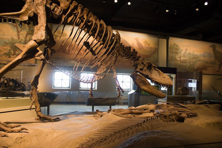 Don't miss the tons of museums in Chicago for kids.