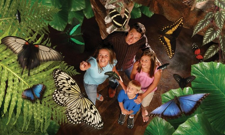Best Branson Spring Break Ideas for Families
