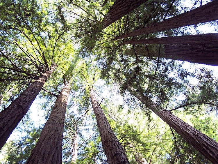 Tours to Muir Woods