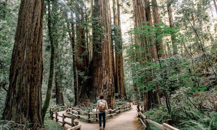 Tours To Muir Woods Which Is The Best