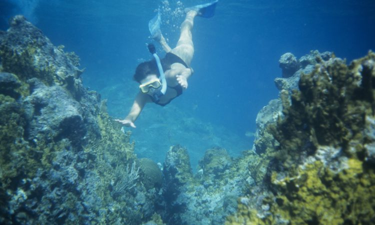Best Snorkeling in Oahu