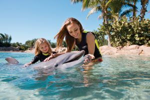 Activities besides theme parks