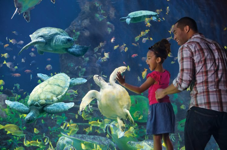 Little girl sees turtles at aquarium in San Diego