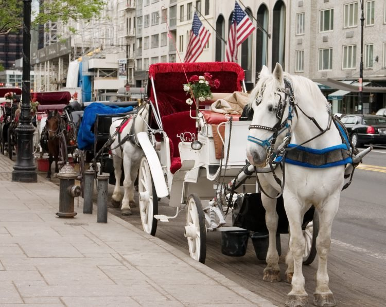 NYC horse and carriage tours