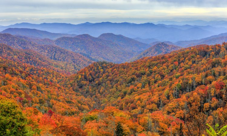 Pigeon Forge Fall Foliage