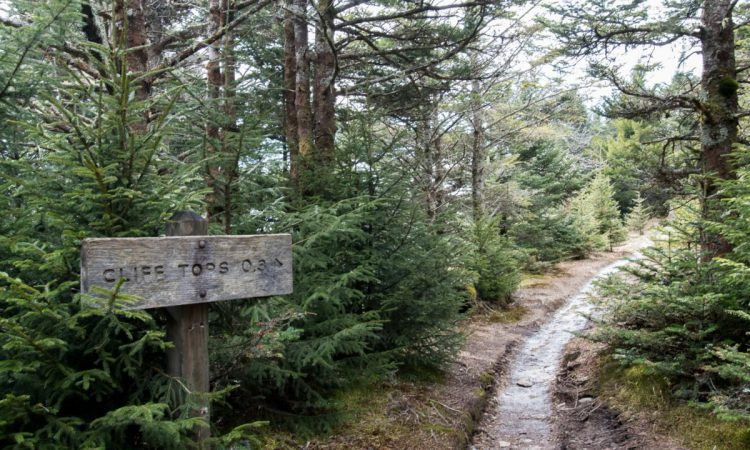 Alum Cave to Mt. LeConte Trail