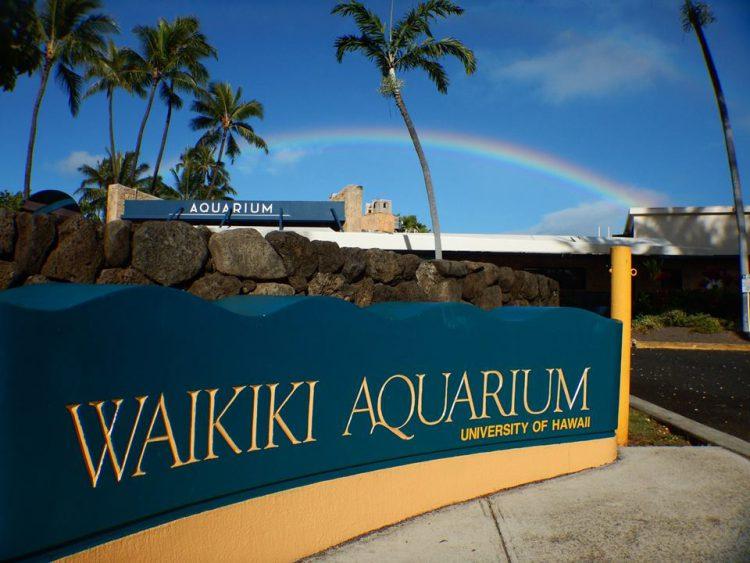 Waikiki Activities