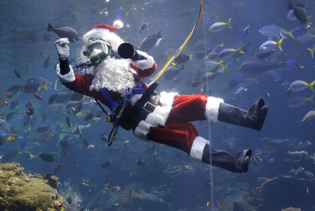 A scuba diving Santa Claus swims with fish at an aquarium