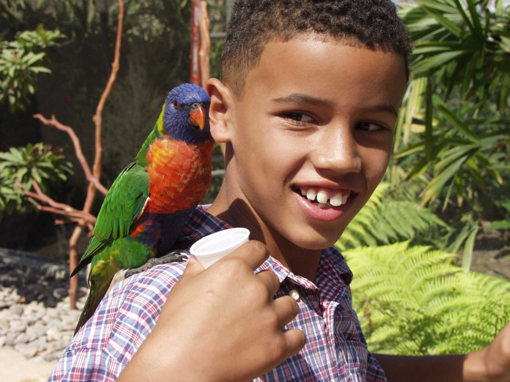 A young boy in a plaid shirt feeds a tropical bird sitting on his shoulder.