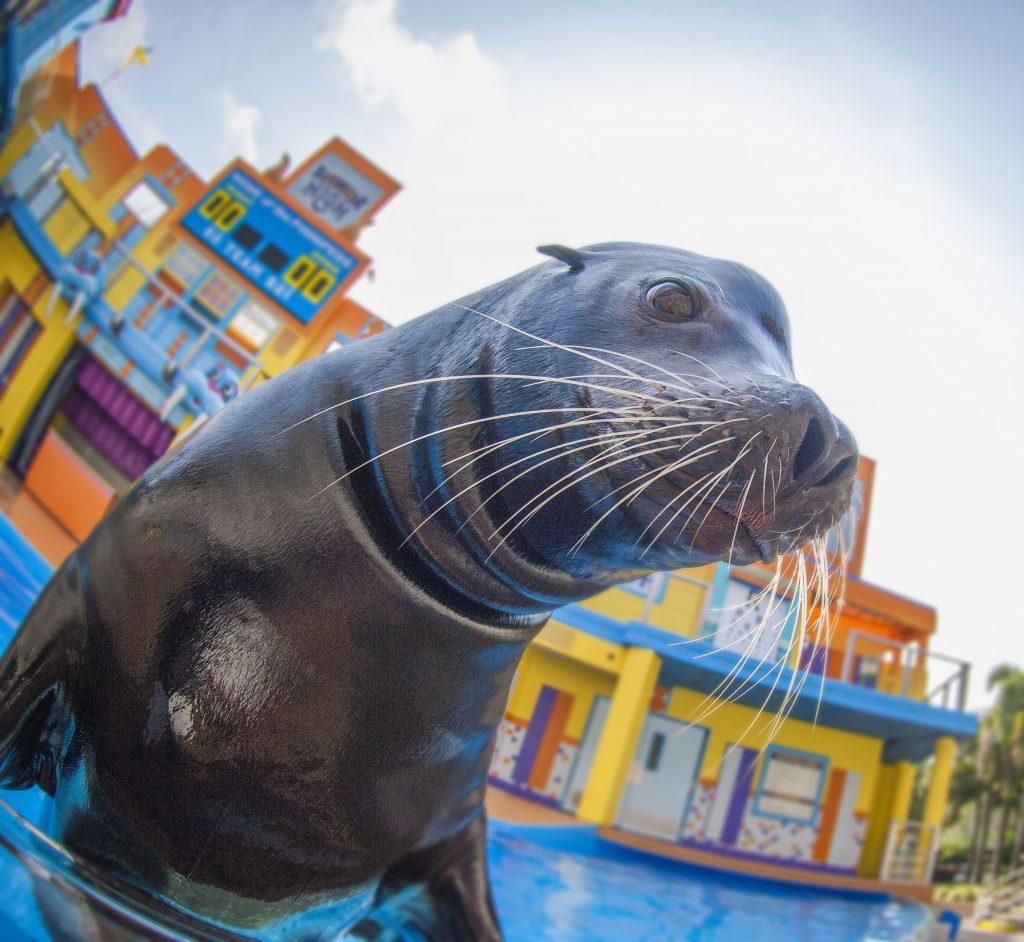 SeaWorld and Busch Gardens